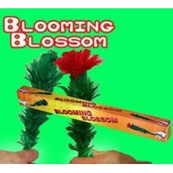 Blooming blossom flower
