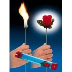 Torche en Rose