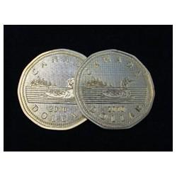 Jumbo Shell with Jumbo Canadian Loonie Coin